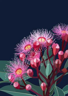 Eucalyptus Bloom Ll Limited Edition Print Lamaianne Com - Eucalyptus Bloom Ll Limited Edition Wall Art On A Dark Navy Background By Australian Artist Lamai Anne Bring The Australian Outdoors Into Your Home Print Information A Fine Art Limited Edition Prin Floral Illustrations, Botanical Illustration, Botanical Art, Illustration Art, Australian Native Flowers, Australian Artists, 3d Artwork, Fantasy Artwork, Art Floral