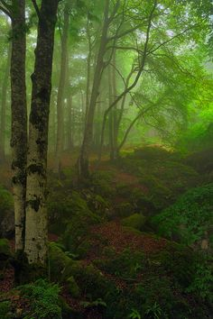 Beech Forest in Navarra, Spain by  Rueda Palomares Agustin