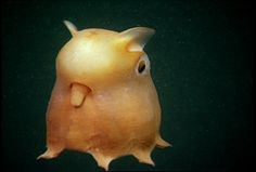 Niume | Circle: Captured Underwater