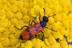 Hidden life of insects by Suren Manvelyan