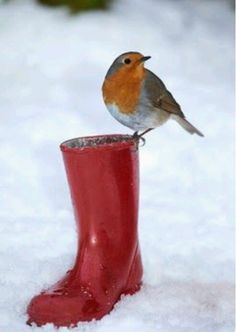 When you see Robin Redbreast Winter is here. Pretty Birds, Love Birds, Beautiful Birds, Animals Beautiful, Cute Animals, Robin Vogel, Red Robin Bird, Robin Redbreast, Winter Beauty
