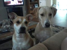 Here is Caroline (formerly Carolina) on the left with her new brother. She is settling in well in her new forever home!