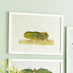 Also for Claires rm can do as a grouping  A Great Leap Forward Wall Art - Citron Locust