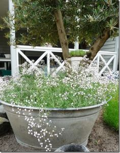Lovely old metal bath/bucket.would fill it with rose/purple coloured flowers.as those colours are in my little garden. Garden Cottage, Garden Pots, Container Plants, Container Gardening, Plant Design, Garden Design, White Gardens, Ornamental Grasses, Plantation