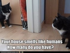 Your house smells like humans. How many do you have?