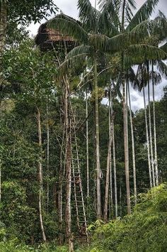 Take a little design advice from the Korowai tribe of Papua in Indonesia, who live year-round in the trees. Secured to a strong banyan tree, these sky-high houses are safe from swarms of mosquitoes—and annoying neighbors.