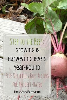 Beets are a nutrition powerhouse and an efficient way to grow healthy produce. With the tips in this article, you'll be growing your own in no time. Afraid to try beets? These delicious recipes are sure to please the beet-hater.