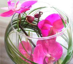 centre de table, bulle, orchidée