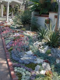 Echeverias, agaves and other succulents...Sherman Gardens by serialplantfetishist