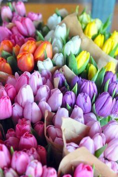 Quiero bastante: ¡Lúnulas de cosas bonitas / bonita materia Arbitraria! tulipanes