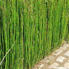 Prêle japonaise, Stipa, Acheter des vivaces : plantes pour le jardin - Jardinerie TRUFFAUT