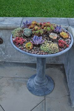 Succulents in a bird bath! Would also work in a shallow dish