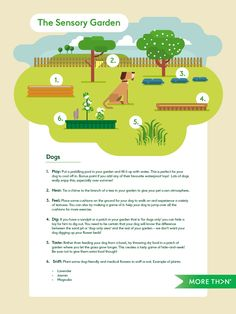 A sensory garden for dogs | MORE TH>N