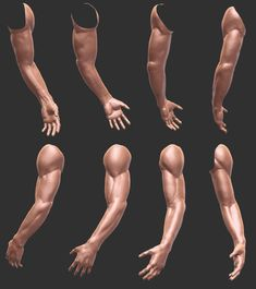 Arm Anatomy, Anatomy Poses, Anatomy Study, Body Anatomy, Anatomy Art, Human Anatomy, Muscle Anatomy, Hand Reference, Figure Drawing Reference