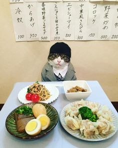 Cat in a suit doing some fine dining.
