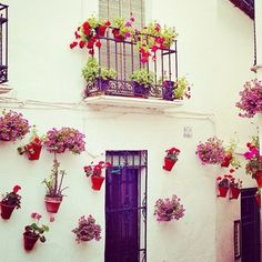 La fiesta de los patios - a citywide contest to find the best patio. For 10 days in May, private courtyards are open to the public....
