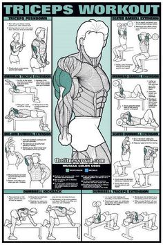 triceps-workout-chart