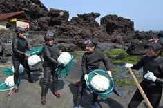 Another interesting cultural aspect of the island is the matriarchal family structure found especially in Udo and Mara. The best examples are given by the haenyeo (sea women) who were often the head of the families because they controlled the income. Haenyeo are women diving all year long in the cold waters without diving gear in order to harvest abalones, conches and a myriad of other marine products.
