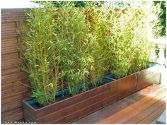 Terrace Project : Building two large bamboo containers. Modern Landscape Design, Modern Landscaping, Backyard Landscaping, Bamboo Planter, Planters, Bamboo Fence, Bamboo Containers, Gemüseanbau In Kübeln, Outdoor Plants