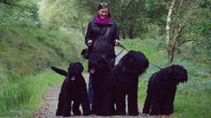 Hotratz Black Russian Terrier - Our Dogs