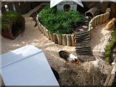 beautiful guinea pig outside enclosure! love this! again, I'm sure with the…