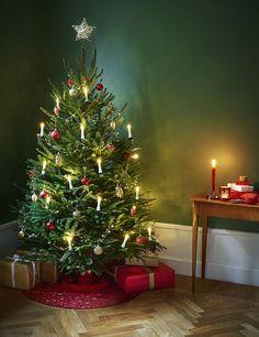Juletreet er en av våre viktigste dekorasjoner i desember. Det er få ting som kan gi mer julestemning enn når du setter opp treet og kjenner trelukten i stua.  Plantasjen tilbyr et bredt utvalg av juletrær slik at du kan finne det treet som passer dine preferanser og behov.