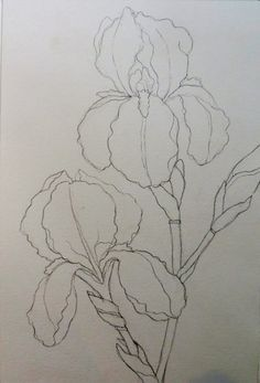 Drawing and painting purple irises can be a challenge! It is also a great opportunity to draw these intricate, undulating shapes, and to c.Painting Bearded Irises step by stepThe Painted PrismWatercolor Paintings of Bearded Iris - Bing ImagesThere is Iris Painting, Painting & Drawing, Watercolor Paintings, Watercolor Artists, Watercolor Drawing, Watercolor Portraits, Silk Painting, Watercolor Landscape, Watercolors