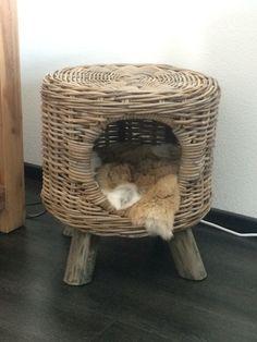 Kattenmand - konijnenhuid