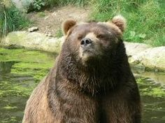 You love spending time in the great outdoors, but how do you protect yourself from bears and other wild animals that might be in the area you're...