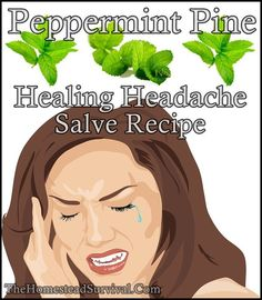 Peppermint Pine Healing Headache Salve Recipe Homesteading - The Homestead Survival .Com