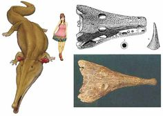 Permian archegosaurid (amphibian) Prionosuchus