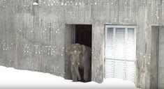 Video zeigt die Tiere im Oregon Zoo, wie sie im Schnee spielen