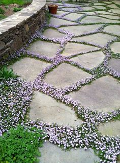 flowering ground cover, gardening, landscaping, flowers LOVE the idea of planting low-growing, flowering ground cover between flagstone pavers, Id use the one in the picture, or purple thyme or something like Sweet Vernal grass (vanilla scented)