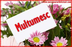 Multumesc Good Night, Good Morning, Best Dance, Nicu, Happy Birthday, Thankful, Place Card Holders, Corsage, Facebook
