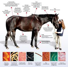 Best natural wormer that gets them all is Big Sky Minerals www.happyntauralh... SUPPORTYOURHORSEH...