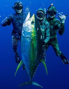 Tuna fishing trip - Catch fish with divers, #spearfishing #deepseafishing #tunefishingtrip