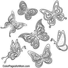 Butterfly Coloring Page 46