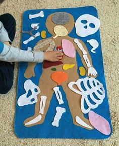 """Educational Felt Human Anatomy/ """"Parts of the Body""""/ Human A.- Educational Felt Human Anatomy/ """"Parts of the Body""""/ Human Anatomy Felt Set/Montessori Toy/Science Toy Educational Felt Human Anatomy/ Parts of by LupitasLovelyCrafts More - # Kid Science, Science Toys, Science Activities, Science Projects, Preschool Activities, Science Ideas, Science Centers, Science Crafts, Children Activities"""
