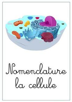 Animal Cell, Montessori Education, Home Schooling, Techno, Homeschool, Medical, College, Children, Inspiration
