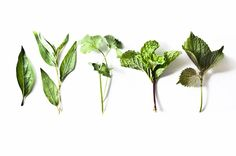 vietnamese springroll.From left to right: Thai basil, rau răm (Vietnamese mint), cilantro, mint leaves, shiso.