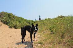 Doggie Day Trip: Historic Montauk