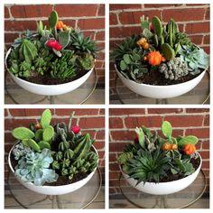 apt. 1n : DIY Succulent Garden