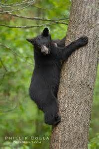 Bear Photo - Yahoo Bildesøkresultater