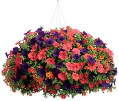 My favorite site for putting together container pots and baskets.  You put in your zip code and it lets you know what plants are best for your area, sun or shade, how to plant the pot; i.e plant position, etc.  100's to choose from....you be here for hours choosing your favorites!