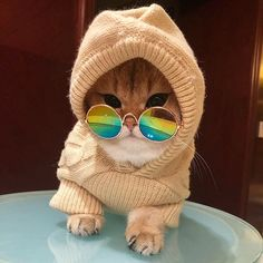 Best Cat Clothes And Cat Costumes For a Dress Up Party - ChonkerCats Cute Cats And Kittens, I Love Cats, Cool Cats, Kittens Cutest, Cute Funny Animals, Funny Animal Pictures, Cute Baby Animals, Funny Cats, Cute Cat Memes