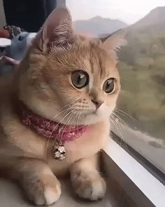 @Catloverz111 Funny Animal Videos, Animal Memes, Cute Kittens, Cats And Kittens, Cute Baby Animals, Funny Animals, Orange Tabby Cats, Cute Creatures, Beautiful Cats