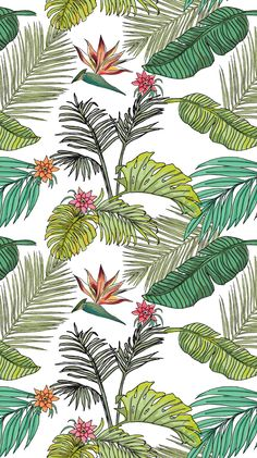 Hello August Rainforest iPhone Home Wallpaper @PanPins