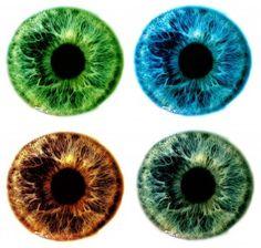 Bioflex erikoisväri ruiskukka, värillinen pupilli