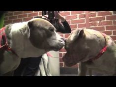 ▶ A Tribute To The Heroes Among Us - The Work of Hope For Paws - Please Share!! - YouTube
