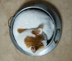 おこげ - かご猫 Blog